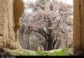 طبیعت بهاری ایلام
