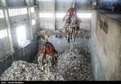 کارخانه زباله سوز تولید برق آرادکوه