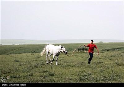 جشنواره زیبای اسب اصیل ترکمن - گلستان