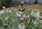 پیروزی در جنگ علیه تروریسم بدون مبارزه جدی با مواد مخدر امکانپذیر نیست
