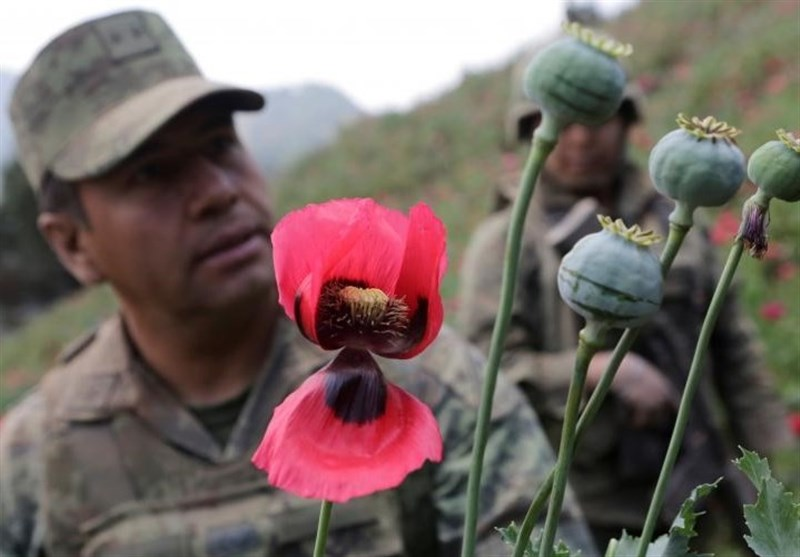 New US Strategy on Afghanistan Ignores Anti-Drug Campaign: Afghan Officials