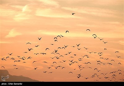 World Migratory Bird Day