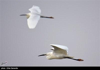 مہاجر پرندوں کے عالمی دن کے موقع پر خوبصورت تصاویر