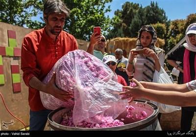 مهرجان استخلاص ماء الورد