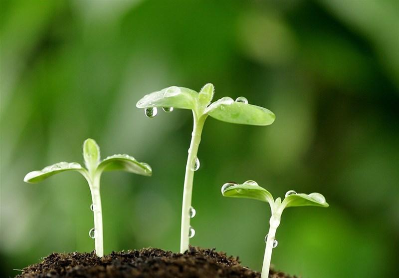 کهگیلویه و بویراحمد پایلوت تولید محصولات ارگانیک شود