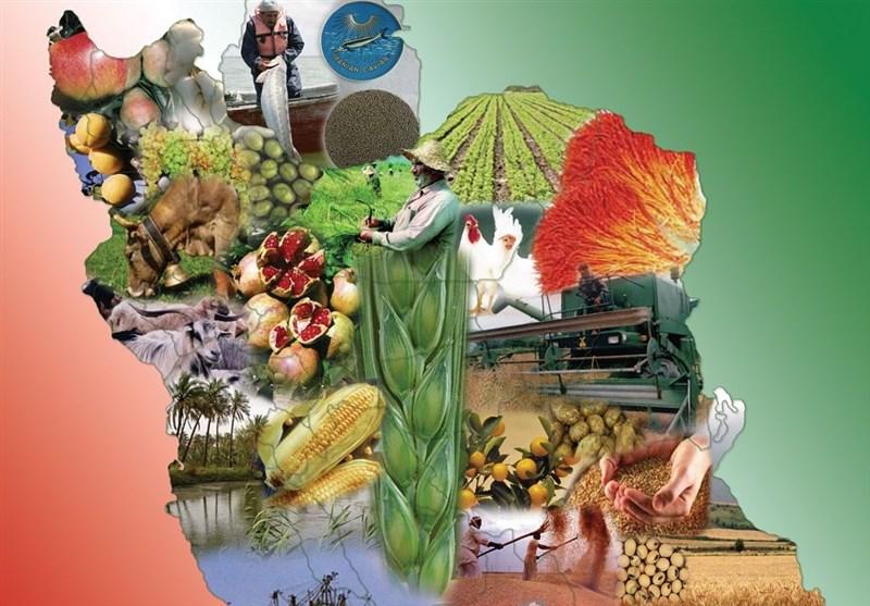 جزئیات برنامه دقیق و عملیاتی برای ایجاد 5 میلیون شغل در بخش کشاورزی
