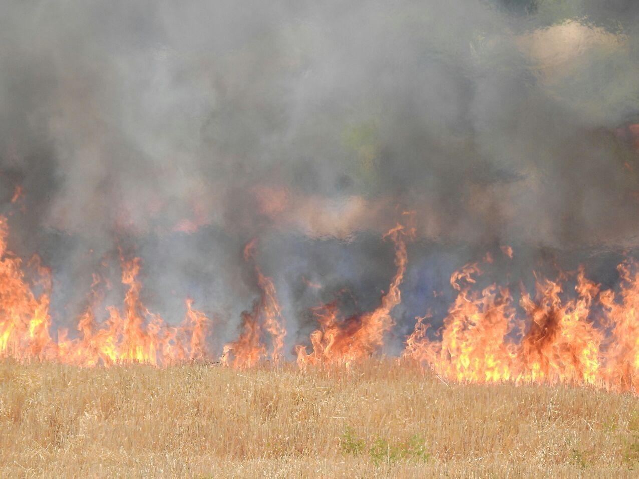 خط و نشان محیط زیست با کشاورزان در صورت سوزاندن مزارع