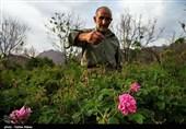 ایلام| بازار گل و گیاه در شهرستان درهشهر راهاندازی میشود