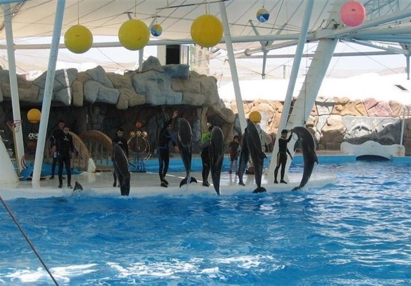 The Dolphin Park on Kish Island