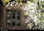 شکوفه های بهاری اراک