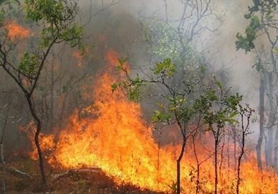 وقوع ۲۸۲ مورد آتشسوزی جنگل در ۲۷ استان کشور از ابتدای سال