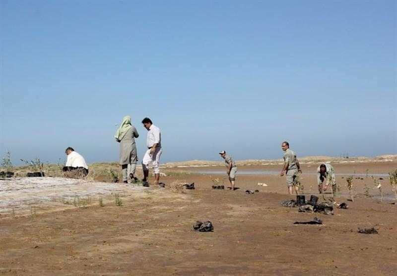 نهال درختان «حرا» در سواحل خلیج فارس در دلوار تنگستان کاشته شد