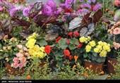 نمایشگاههای گیاهان دارویی و صنایع دستی در قزوین برگزار میشود
