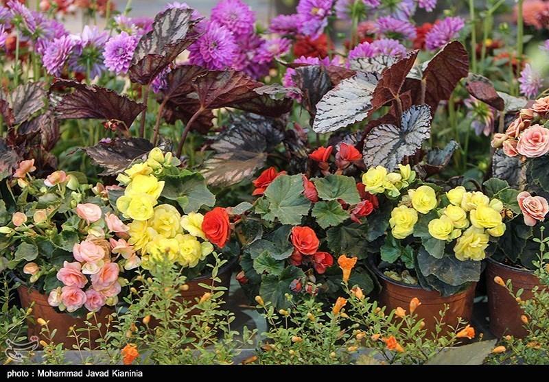 مازندران|چهارمین نمایشگاه ملی گل و گیاه در آمل آغاز بهکار کرد