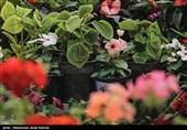 نمایشگاه گل و گیاه در کرمان