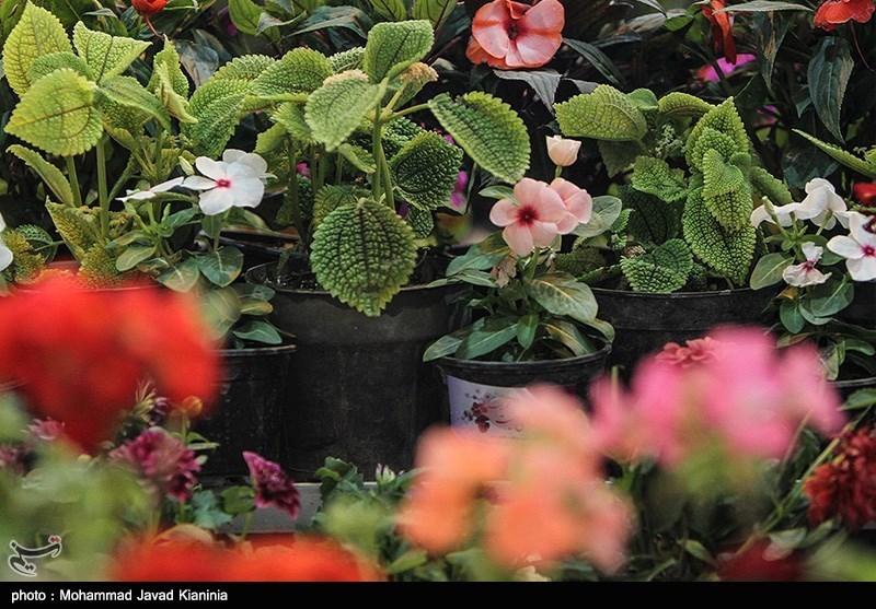بازارچه گل و گیاهان زینتی مازندران راهاندازی میشود