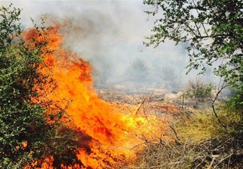 آتش سوزی باغات کوه خامین گچساران مهار شد