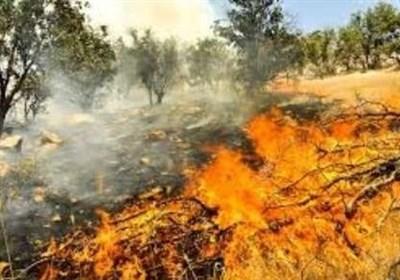 دمای هوا در آستانه ۴۰ درجه؛ خطر آتشسوزی طبیعت سبز خراسانشمالی را تهدید میکند