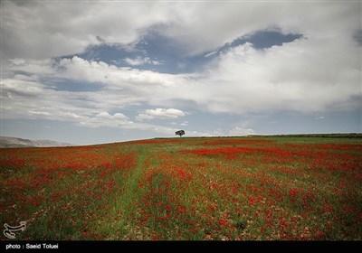 ایران کے صوبہ شمالی خراسان کا جنت نظیر ٹکڑا