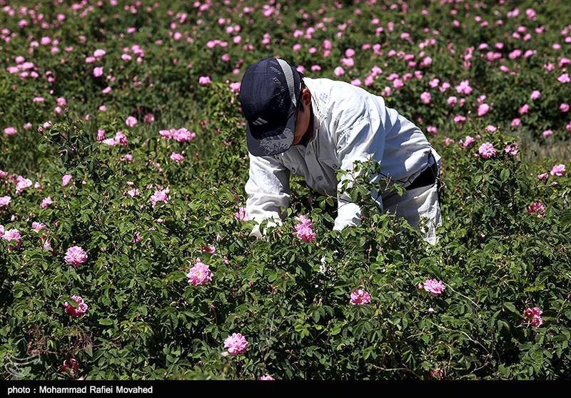 https://newsmedia.tasnimnews.com/Tasnim/Uploaded/Image/1396/03/09/139603091141227911026774.jpg