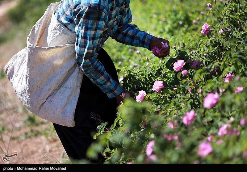 https://newsmedia.tasnimnews.com/Tasnim/Uploaded/Image/1396/03/09/1396030911412364211026774.jpg