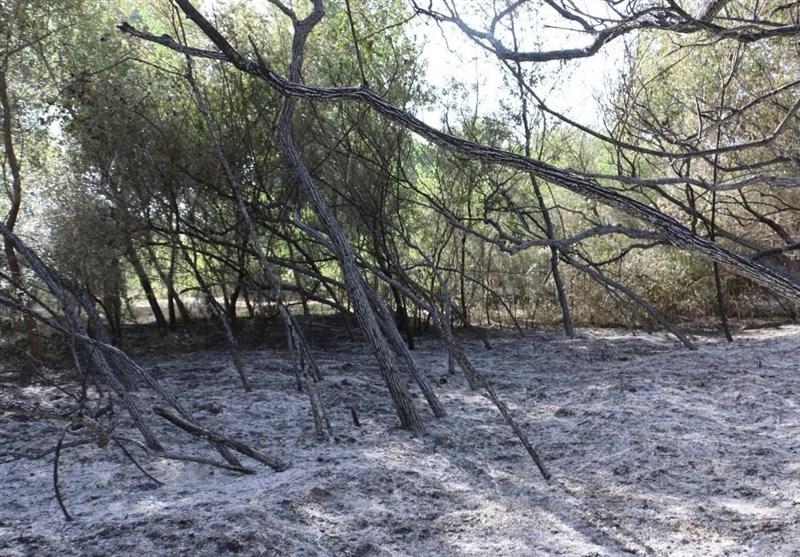 آتش سوزی در «پارک ملی کرخه» مهارشد/ تبدیل 100 هکتا به خاکستر+تصاویر