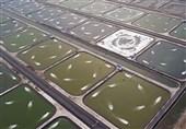 پیشبینی برداشت 15 هزار تن میگو در استان بوشهر