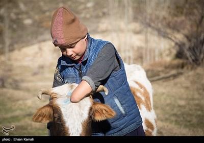 احمد ساسان که در دوران تحصیل همیشه شاگرد اول کلاس در روستای مرزی اشتوت بوده ، پس از مدرسه برای کمک به خرجی خانواده چوپانی نیز میکند . در یکی از روزها که او گله را به بیابان برده بود برای بازی از یک تیر برق بالا میرود و دچار برق گرفتگی شدید میشود و متاسفانه دست چپ خود را به طور کامل ،بخشی از انگشتان دست راست و تعدادی از انگشتان پا را از دست میدهد .هدف احمد این است که با ادامه تحصیلش مهندس شود و به کشور و مردم کشورش کمک کند.