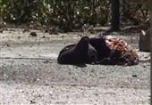 تروریستهای مهاجم به حرم امام با شلیک تکتیراندازها از پای درآمدند