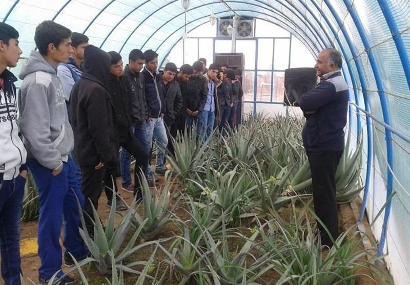 بسته تشویقی برای گرایش دانشآموزان به رشته کشاورزی در نظر گرفته شد