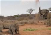 زورآزمایی یک فیل با سه کرگدن بر سر ناهار+فیلم و عکس