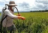 خطر طغیان آفت سن و سایر عوامل بیماری زا در مزارع آذربایجانغربی/گندم آبی احتمال سرمازدگی دارند
