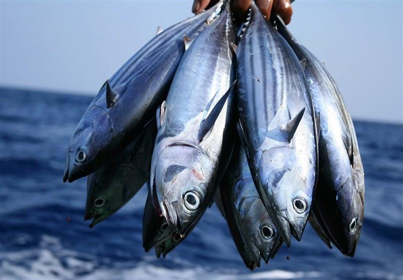 طرح پرورش متراکم کپور ماهیان در استان سمنان آغاز شد