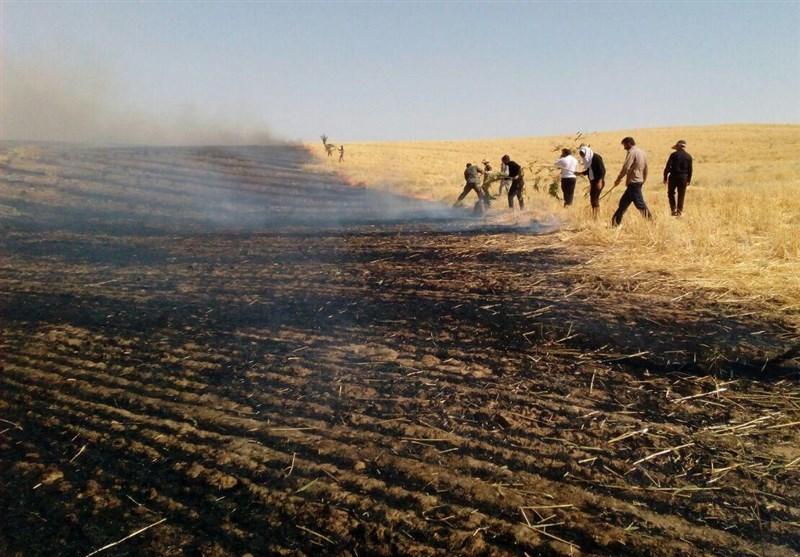 عاملان آتش سوزی مزارع شهرستان کهگیلویه شناسایی میشود