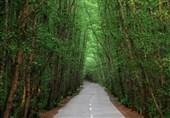 "غابة "" کیسوم "" الساحرة للعیون فی جیلان"