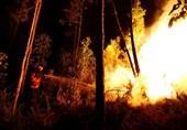 احتمال آتشسوزی جنگلهای قزوین در آخر هفته بالا است