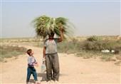"""چشم انتظاری روستائیان برای تولد دوباره """"بامدژ""""/ احیای تالابها سبب بهبود زندگی مردم منطقه میشود"""