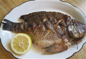 """چرا مصرف ماهی """"تیلاپیا"""" خطرناک است + فیلم"""