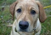 آیا بریدن آلت تناسلی سگهای رباطکریم توسط شهرداری صحت دارد؟