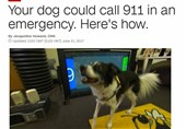 Your dog could call 911 in an emergency.