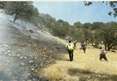 آتش سوزی در شمال شهر یاسوج/ زمین خوارانی که به جنگل هم رحم نمیکنند+فیلم