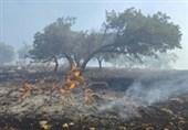 میزان خسارت آتش سوزی جنگلهای اندیمشک اعلام میشود