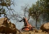 آتشسوزی در جنگلهای الوار گرمسیری اندیمشک کاهش یافت/ تلاش برای مهار کامل حریق