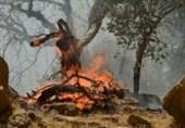 آتش سوزی جنگل های الوار اندیمشک