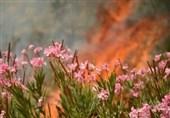 فیلم/ اطفای حریق جنگلهای نکا با بالگرد