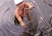 سالانه 20 هزار نفر به دلیل مصرف نوعی ماهی در تایلند میمیرند