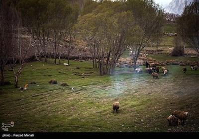 طبیعت تابستانی کرمانشاه