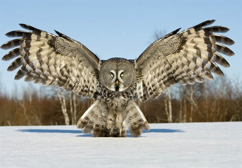 Owls' Wings Key to Beating Wind Turbine Noise