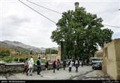 12 درخت کهنسال ایران ثبت ملی شدند + فهرست درختان