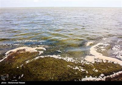 خلیج گرگان در آستانه بحران